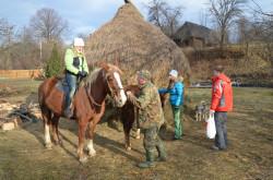 пргулки на лошадях